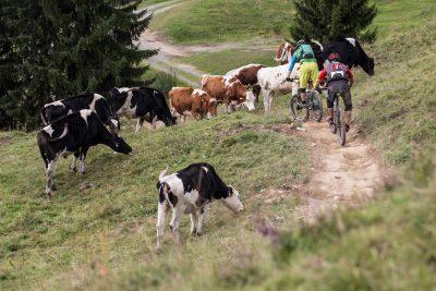 Entspannung und Action bei den Trails in Saalbach Hinterglemm